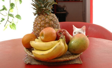 White cat looking at fruit bowl on red table