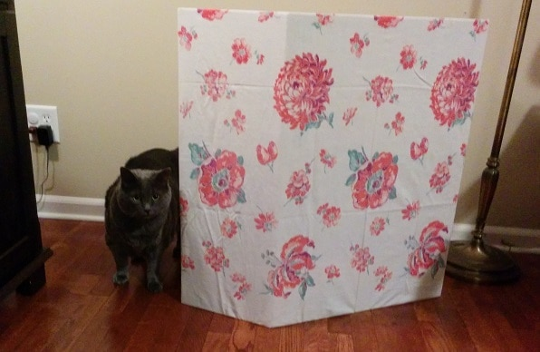 Gray cat walking out from behind a cat litter box privacy screen covered in floral print.
