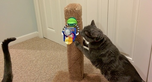 gray cat using a cat scratching post with a child's toy attached.