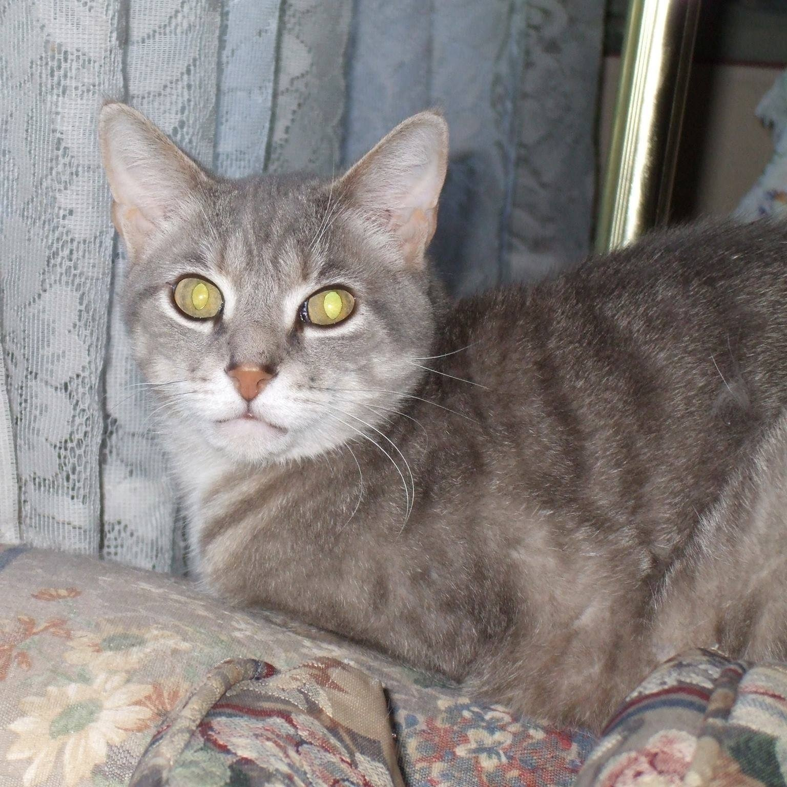 Gray cat sitting on flowered sofa