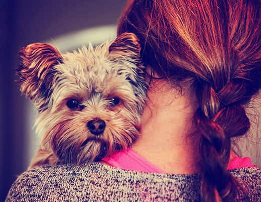 a cute yorkshire terrier peeking from around a woman toned with a retro vintage instagram filter eff
