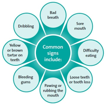 Common signs of dental disease
